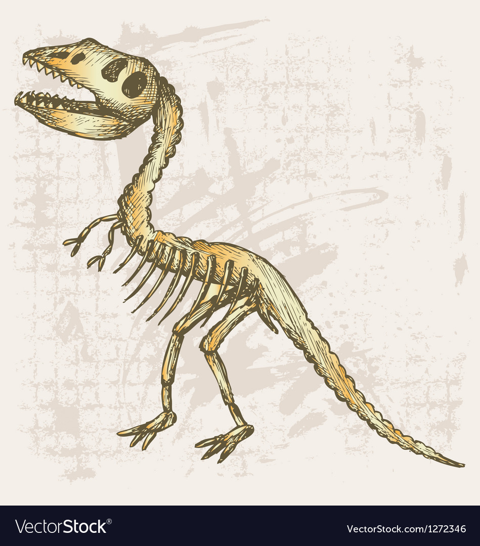 Tyrannosaurus skeleton vector | Price: 1 Credit (USD $1)