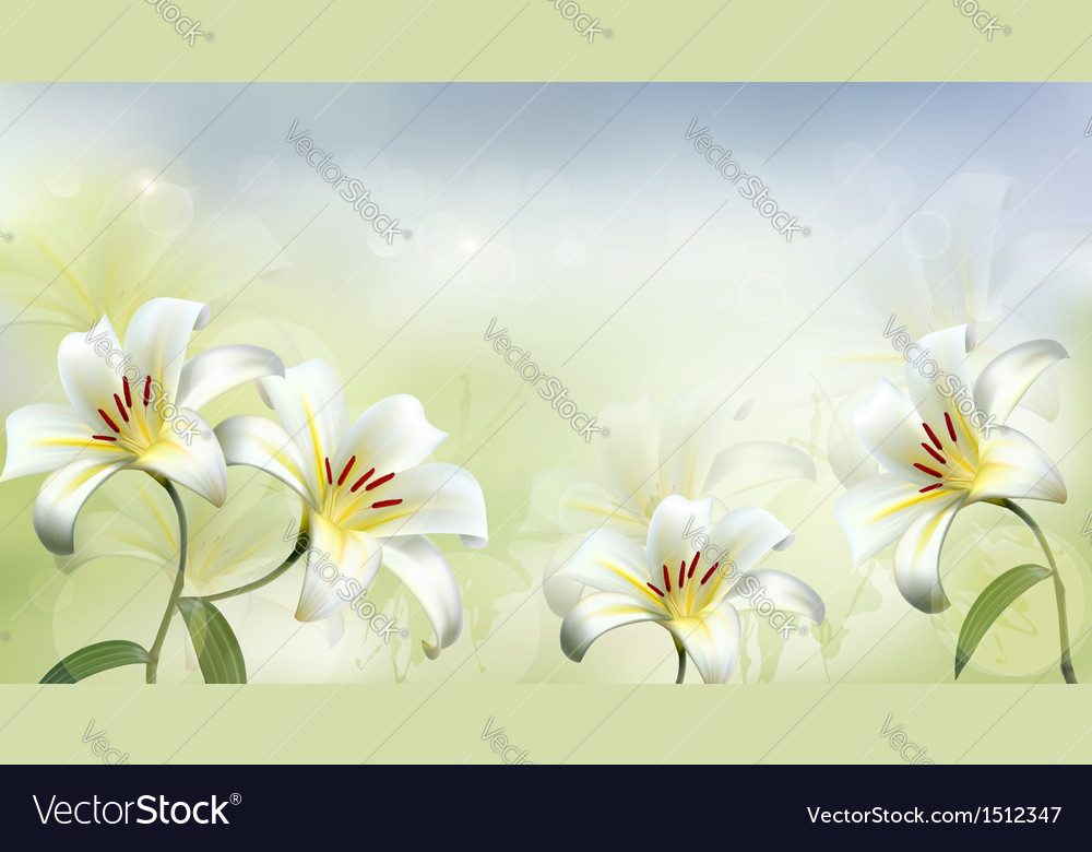 Holiday background with two white lilies vector | Price: 1 Credit (USD $1)
