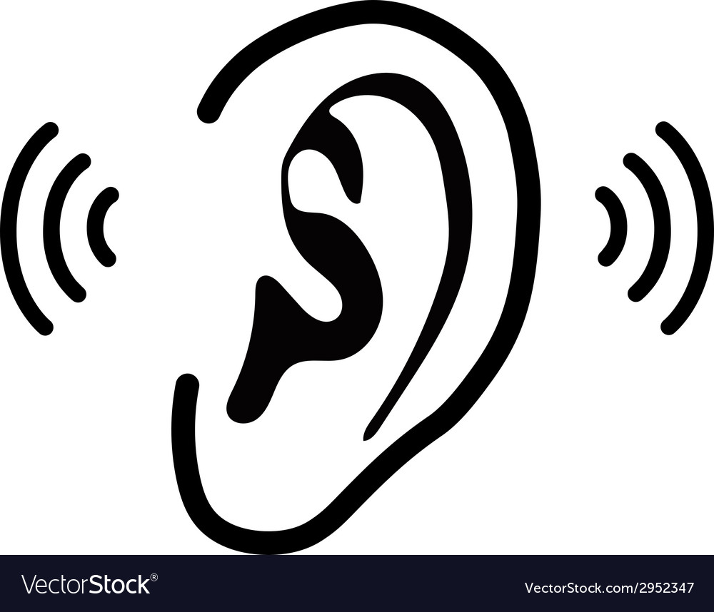 The human ear - vector | Price: 1 Credit (USD $1)