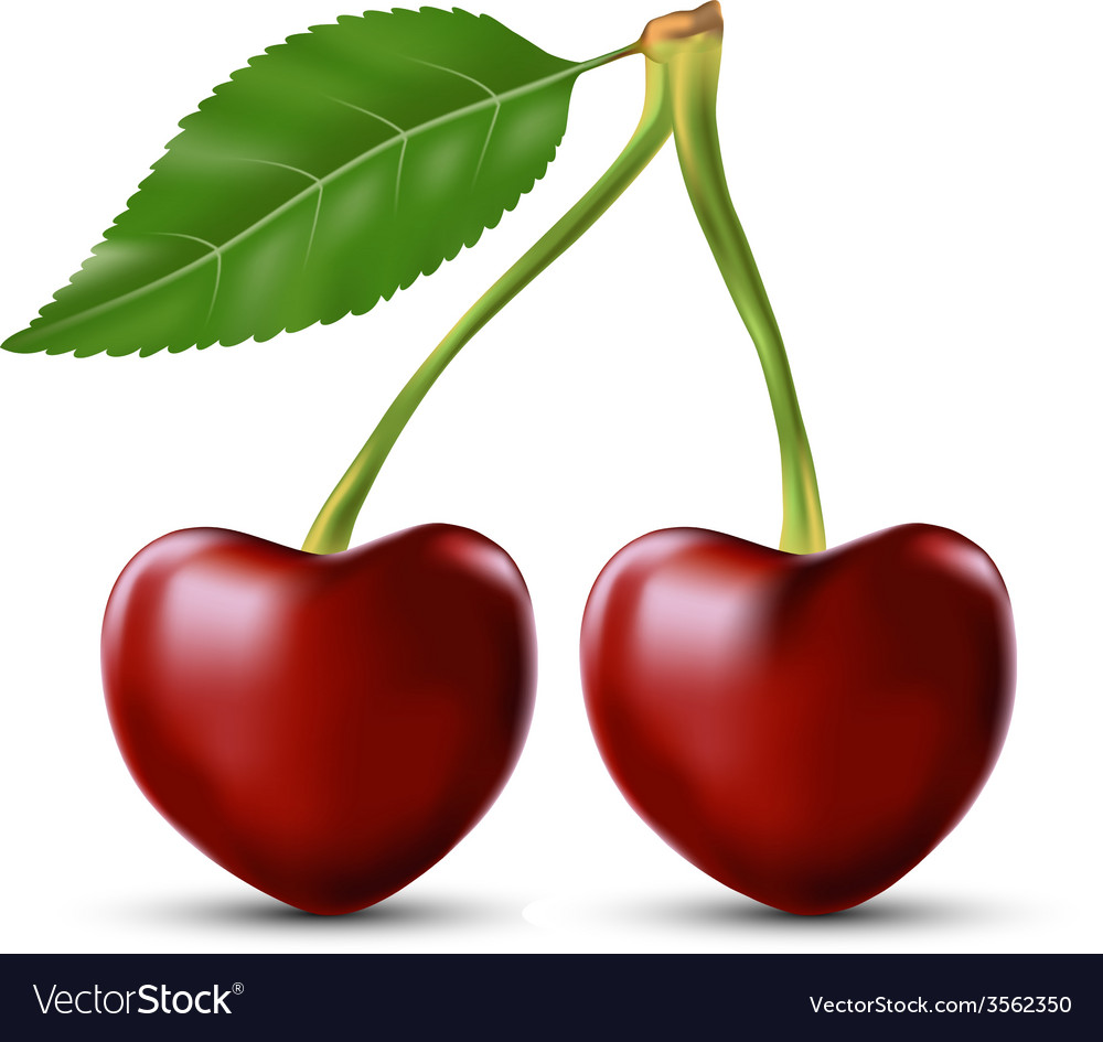 Two lovers cherry like heart vector | Price: 1 Credit (USD $1)