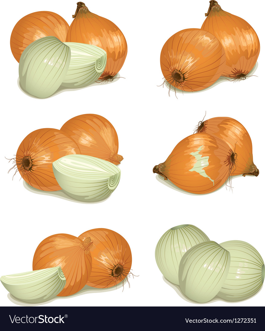 Set of onion vector | Price: 1 Credit (USD $1)