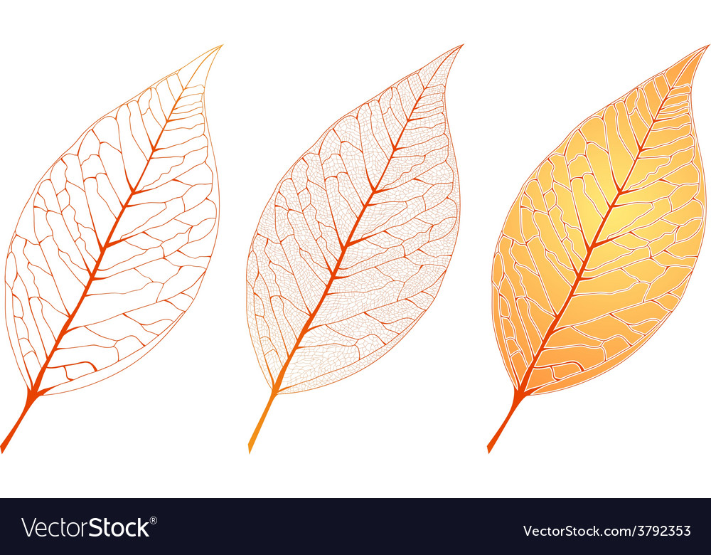 Autumn orange leaf set vector | Price: 1 Credit (USD $1)