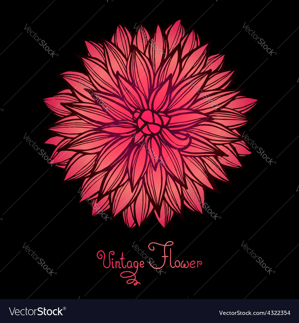 Bright dahlia flower isolated for design vector   Price: 1 Credit (USD $1)