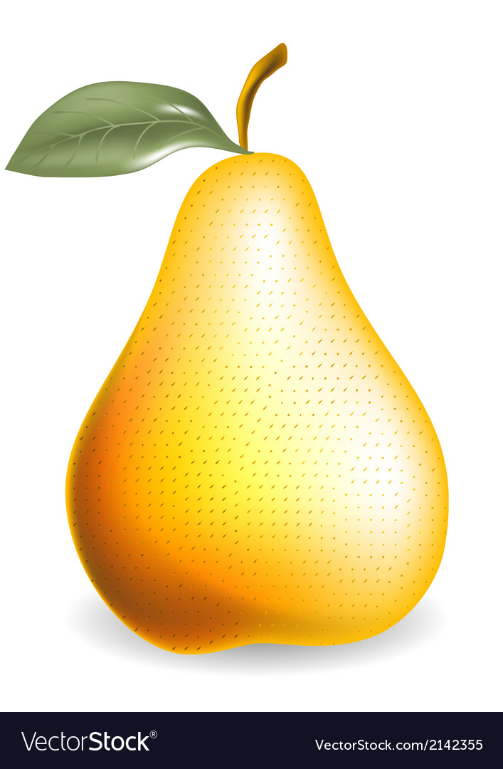 Pear vector | Price: 1 Credit (USD $1)