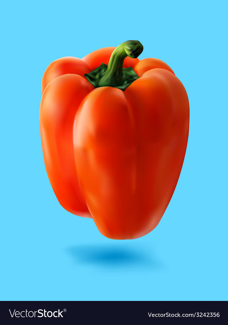 Red hot pepper vector | Price: 3 Credit (USD $3)