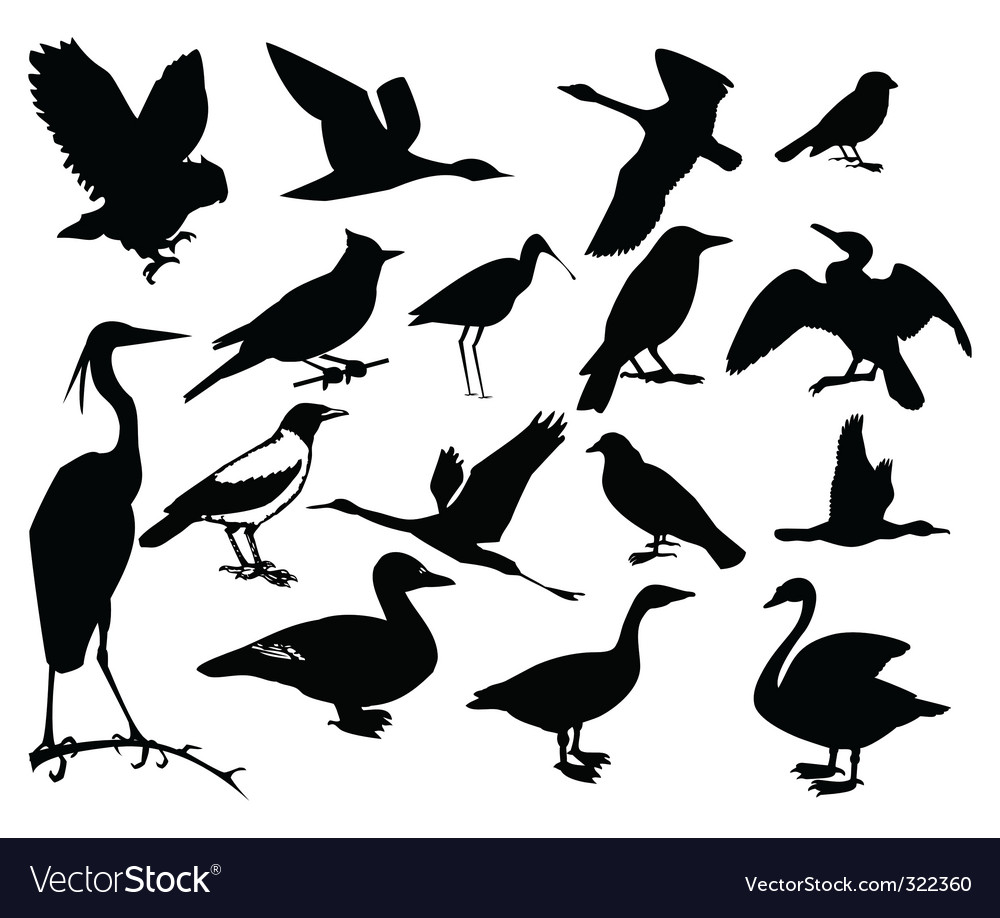 Collection of silhouettes of birds vector | Price: 1 Credit (USD $1)
