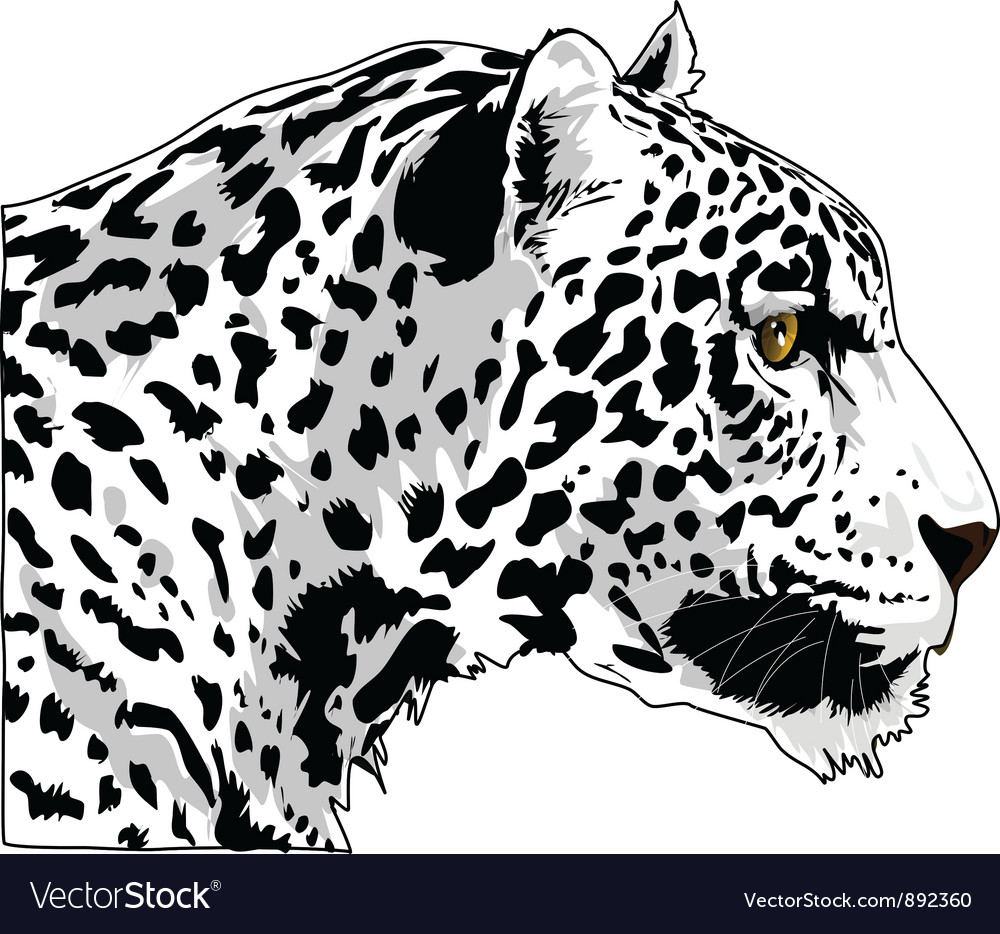 White cougar head art vector | Price: 1 Credit (USD $1)