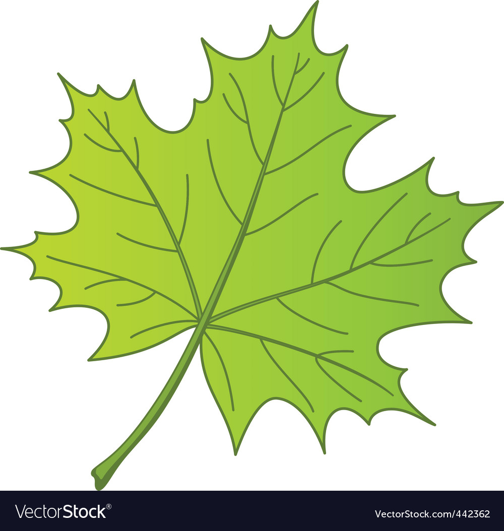 F a maple vector vector | Price: 1 Credit (USD $1)