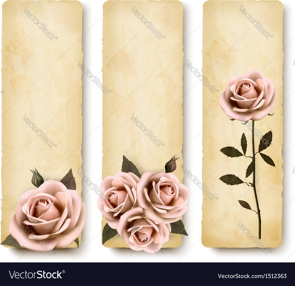 Three retro holiday banners with pink roses vector | Price: 1 Credit (USD $1)