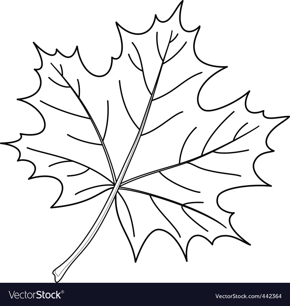 Leaf of a maple contour vector | Price: 1 Credit (USD $1)