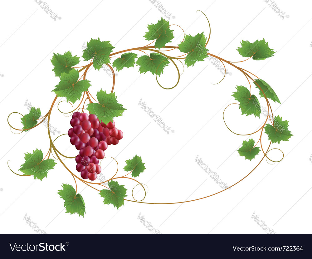 Red grape vine vector | Price: 1 Credit (USD $1)