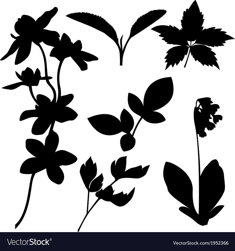Set of botanical silhouettes vector | Price: 1 Credit (USD $1)