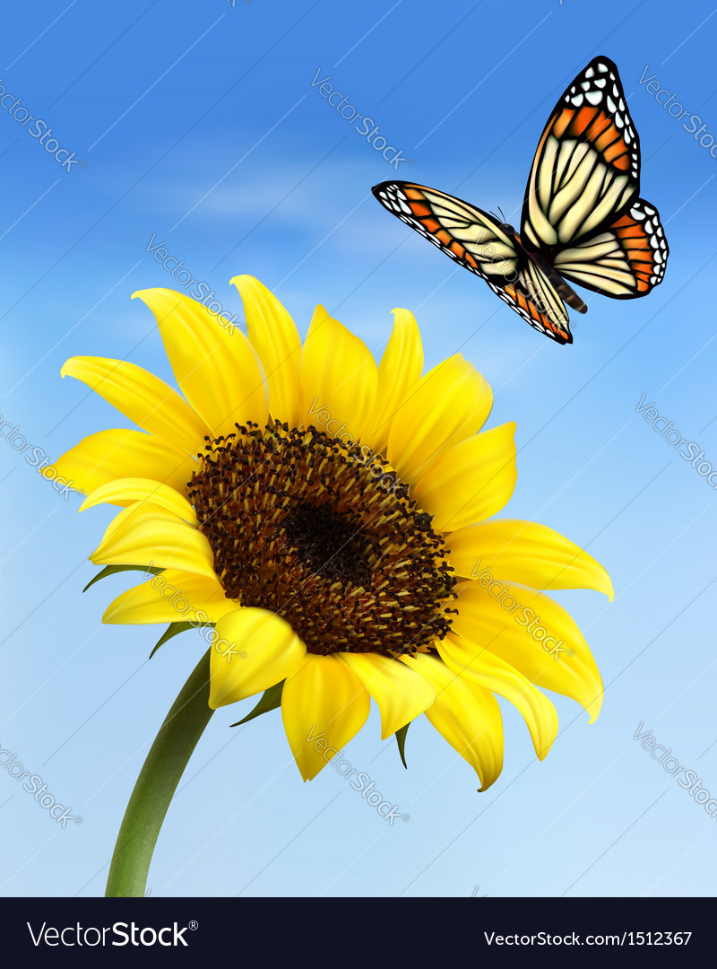 Nature background with sunflower and butterfly vector | Price: 1 Credit (USD $1)