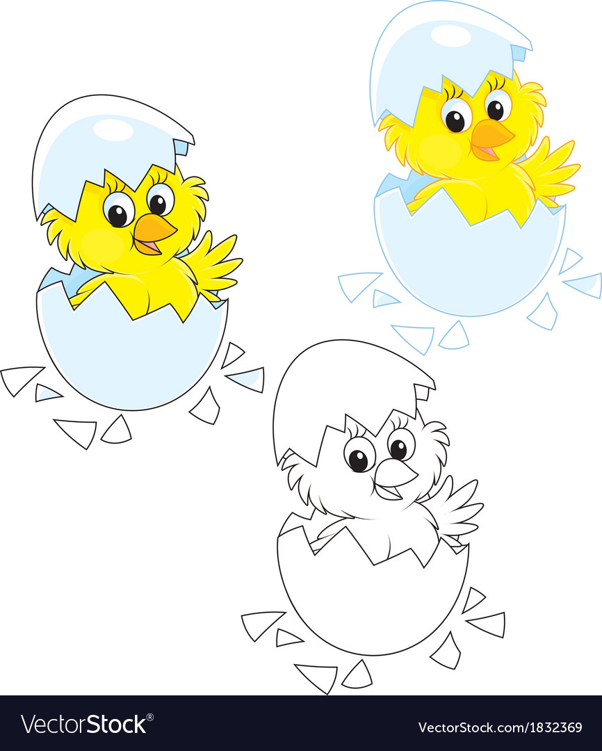 Hatched chick vector | Price: 1 Credit (USD $1)
