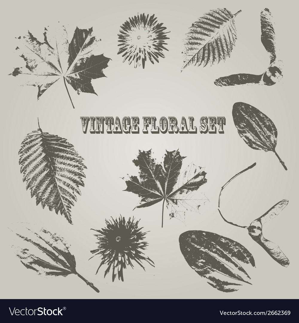 Vintage style floral elements vector | Price: 1 Credit (USD $1)