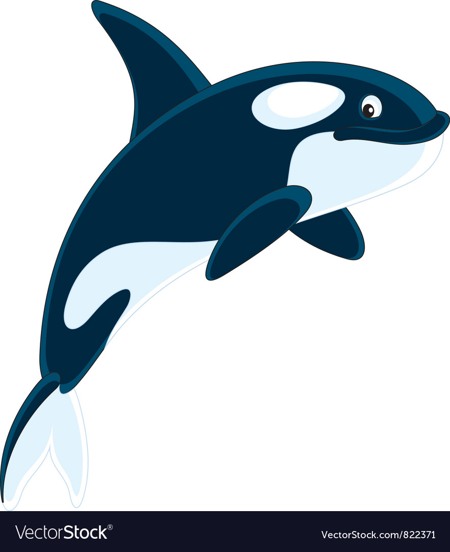 Killer whale vector | Price: 3 Credit (USD $3)