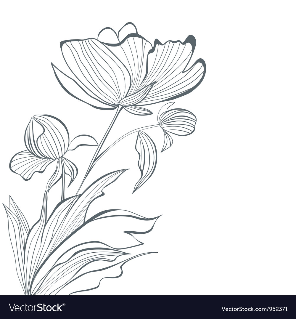 Stylized peony flowers vector | Price: 1 Credit (USD $1)