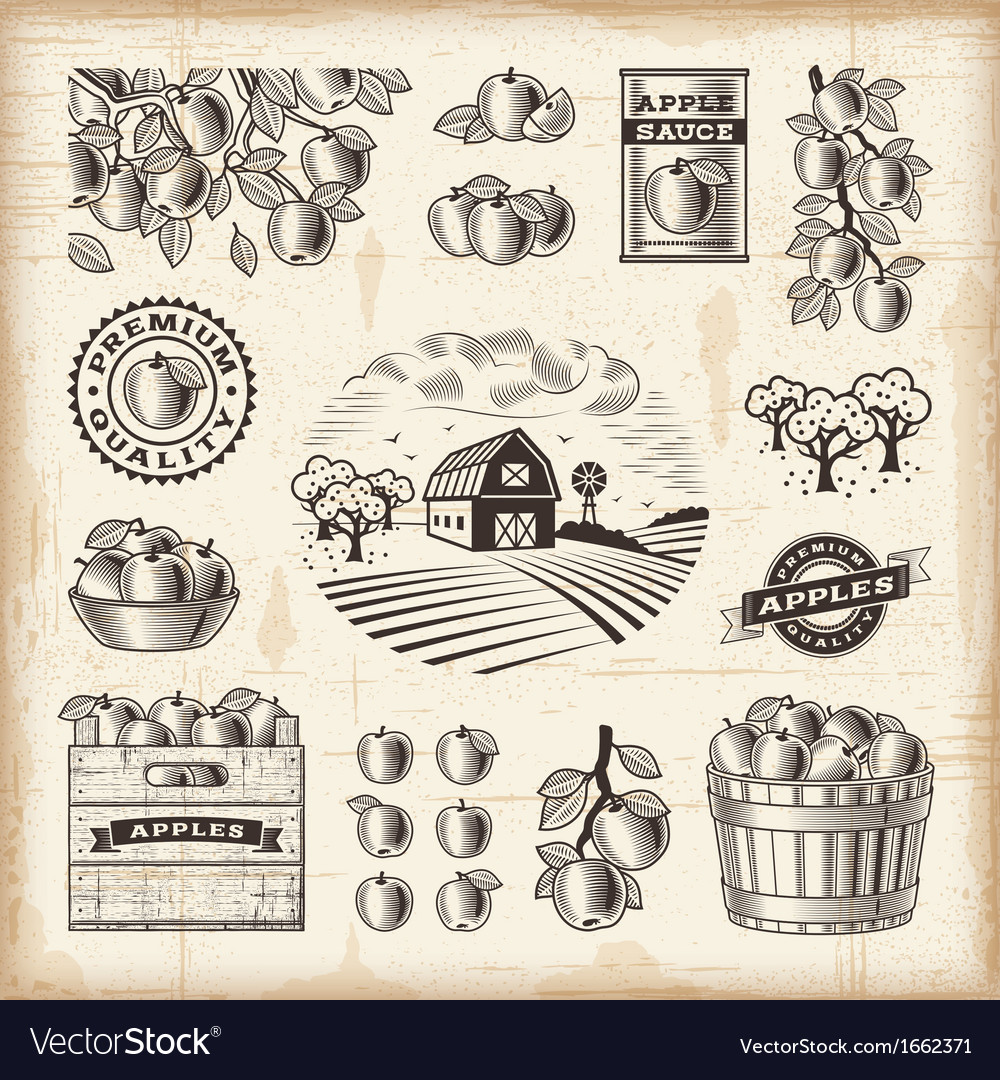 Vintage apple harvest set vector | Price: 1 Credit (USD $1)