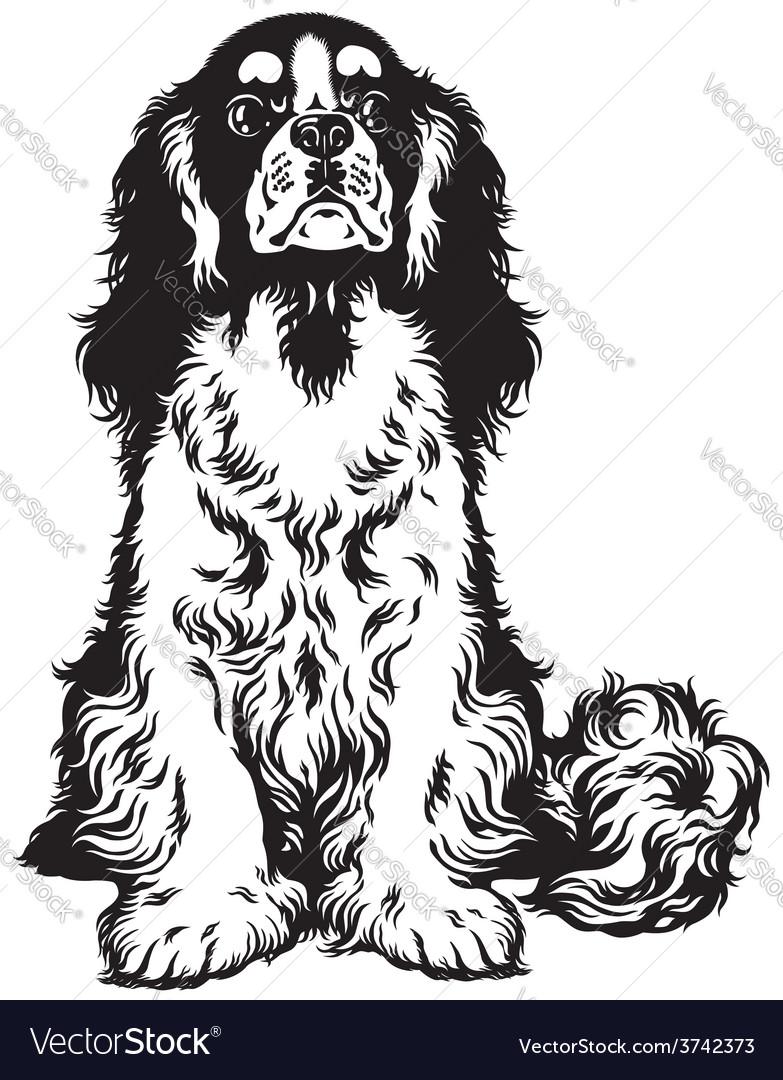 Cavalier king charles spaniel black white vector | Price: 1 Credit (USD $1)