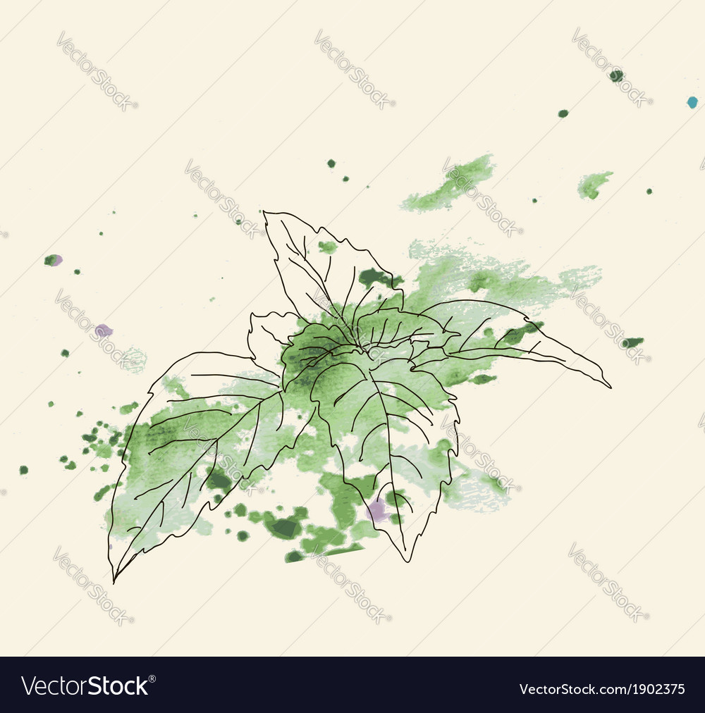 Mint sketch vector | Price: 1 Credit (USD $1)