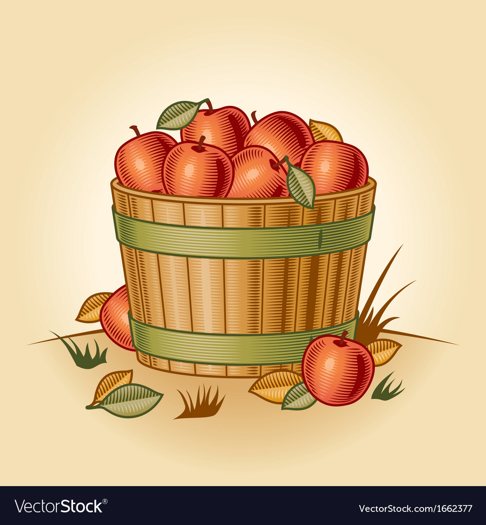 Retro bushel of apples vector | Price: 1 Credit (USD $1)