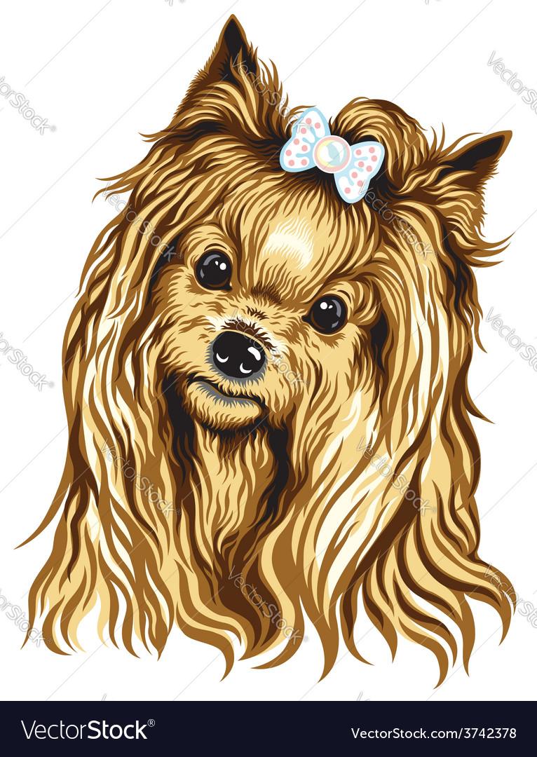 Yorkshire terrier vector | Price: 3 Credit (USD $3)