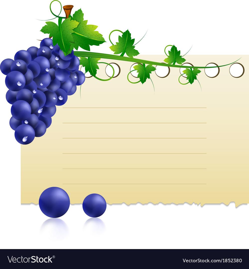 Grape vector   Price: 1 Credit (USD $1)