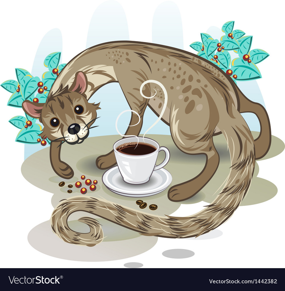 Civet coffee kopi luwak vector | Price: 3 Credit (USD $3)
