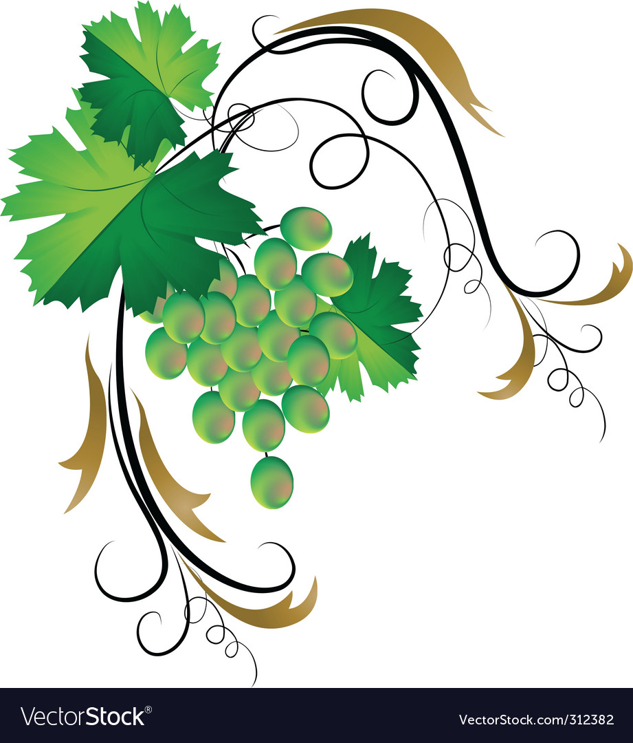 Decorative grapevine vector | Price: 1 Credit (USD $1)