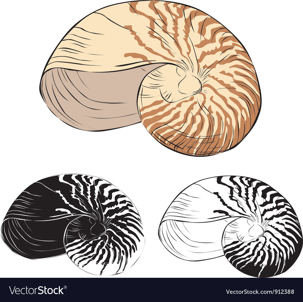 Oceanic isolation shell vector   Price: 1 Credit (USD $1)