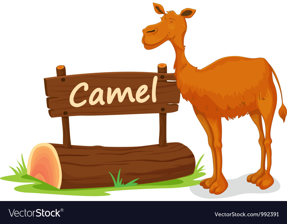 Cartoon zoo camel sign vector | Price: 1 Credit (USD $1)