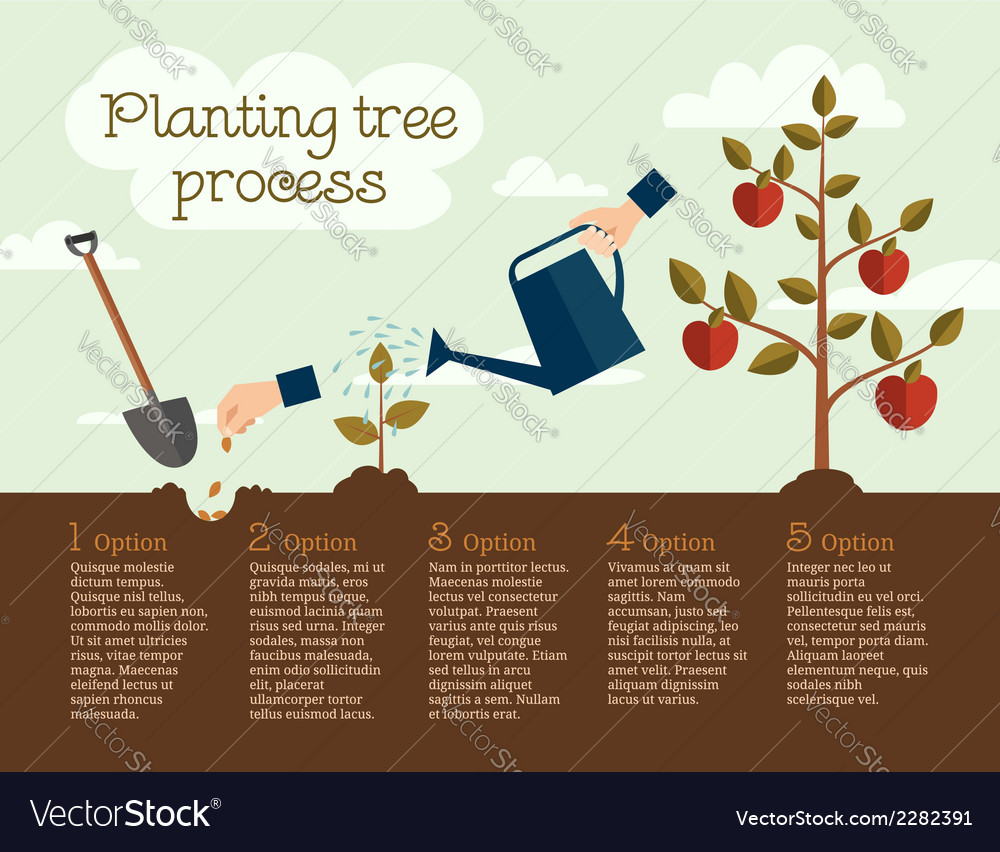 Planting tree process vector | Price: 1 Credit (USD $1)