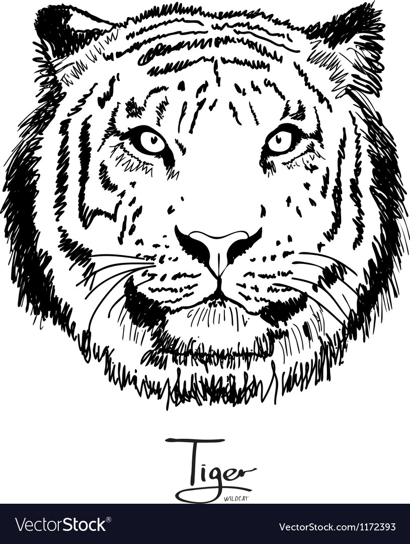Tiger black vector | Price: 3 Credit (USD $3)
