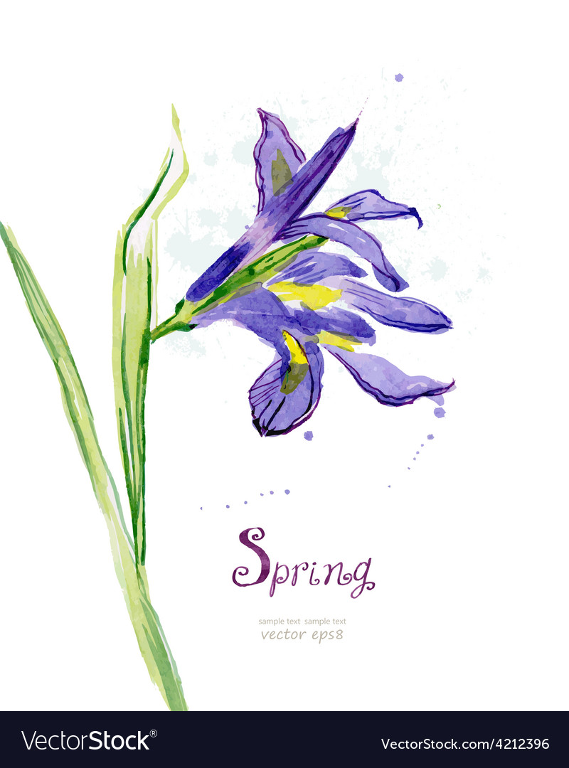 Invitation card with watercolor spring flower iris vector | Price: 1 Credit (USD $1)