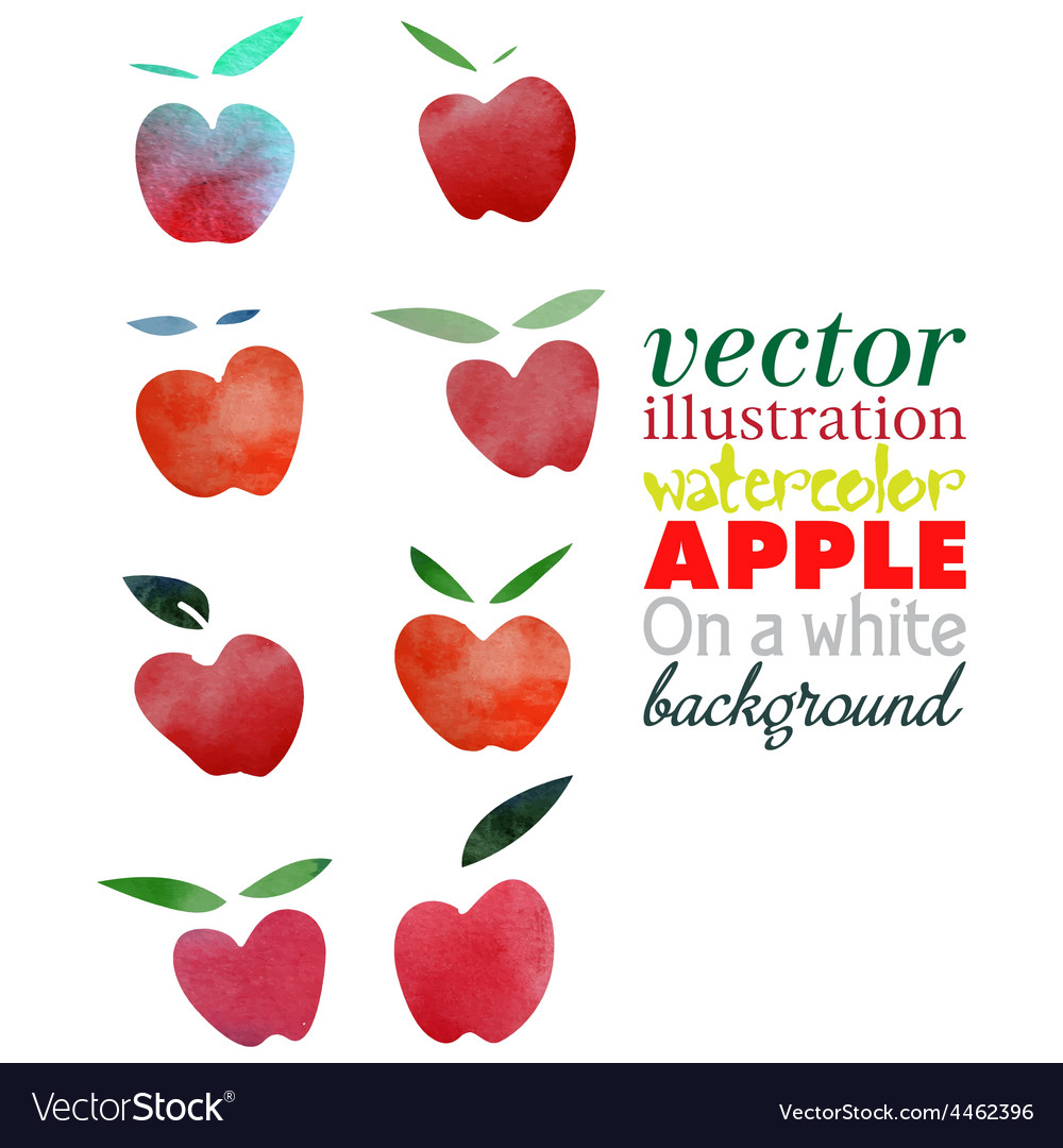 Watercolor apple vector | Price: 1 Credit (USD $1)