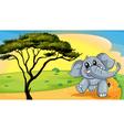 Elephant under a tree vector