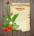 Tropical banner vector