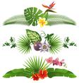 Tropical borders vector