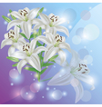 White lily flower background greeting or vector
