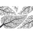 Branches silhouettes on white background vector