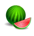 Watermelon green on a white background vector