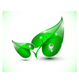 Green leaves with droplets vector