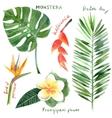 Watercolor tropical plants vector