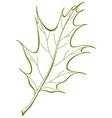 F oak iberian vector vector