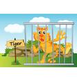 Tiger zoo vector