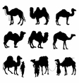 Camels silhouettes detailed vector