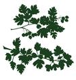 Branch of hawthorn vector