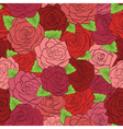 Seamless pattern red roses with green leaves vector