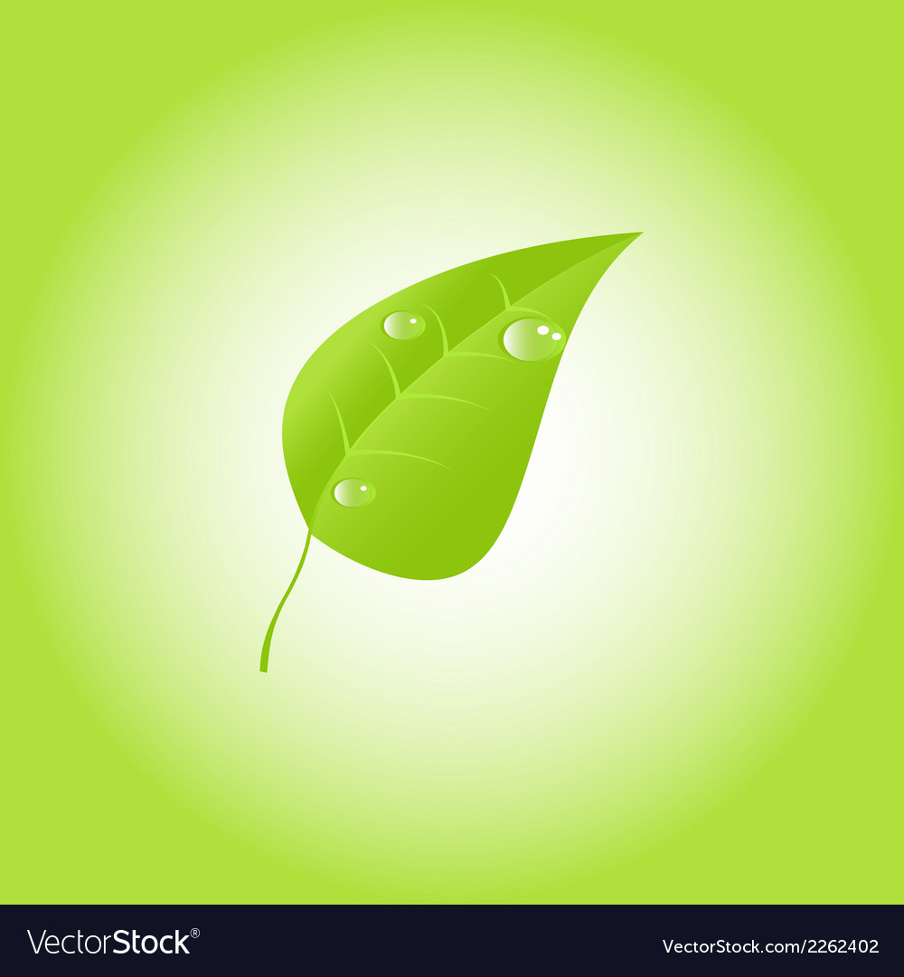 Green leaf with drops of dew eps 10 vector | Price: 1 Credit (USD $1)