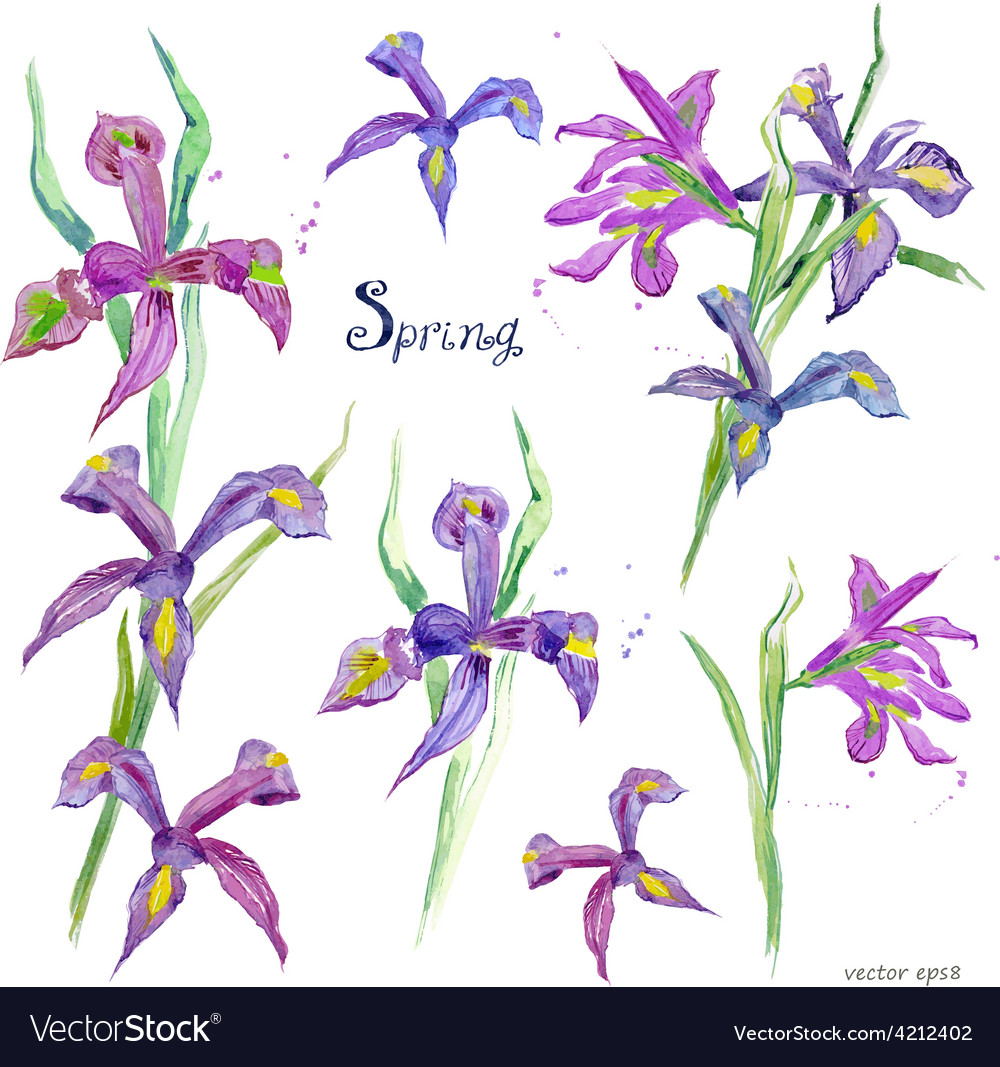 Spring flowers collection watercolor purple iris vector | Price: 1 Credit (USD $1)